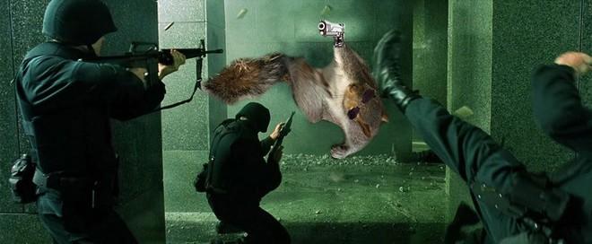 Nhìn các thánh photoshop chế hình chú sóc với dáng đứng bá đạo, ta mới thấy trí tưởng tượng của con người là vô biên - Ảnh 22.