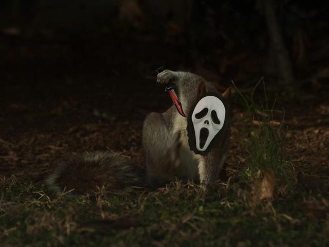 Nhìn các thánh photoshop chế hình chú sóc với dáng đứng bá đạo, ta mới thấy trí tưởng tượng của con người là vô biên - Ảnh 4.