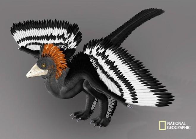Rốt cuộc thì khủng long có màu sắc như thế nào? - Ảnh 10.