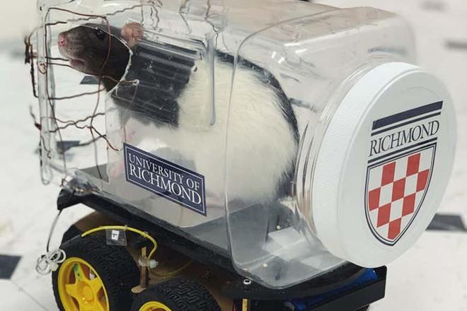 Các nhà khoa học dạy chuột lái ô tô và chúng đã tốt nghiệp xuất sắc thế này đây - Ảnh 1.