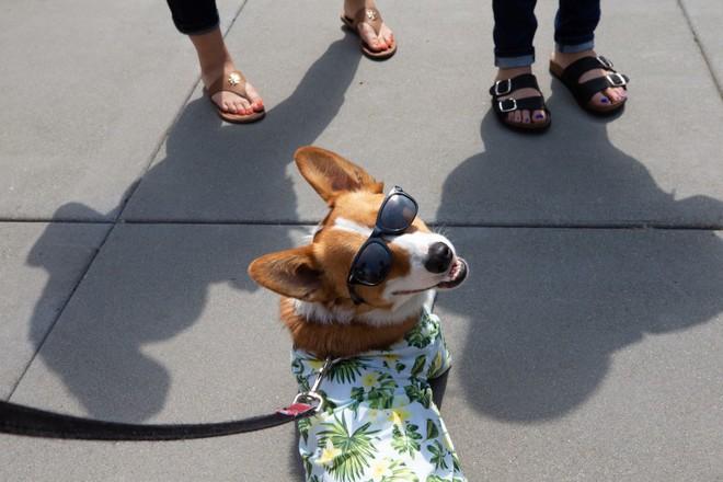Có 7.000 con chó ở trụ sở Amazon tại Mỹ và đây là cách mà chúng sống sung sướng như ở thiên đường - Ảnh 2.