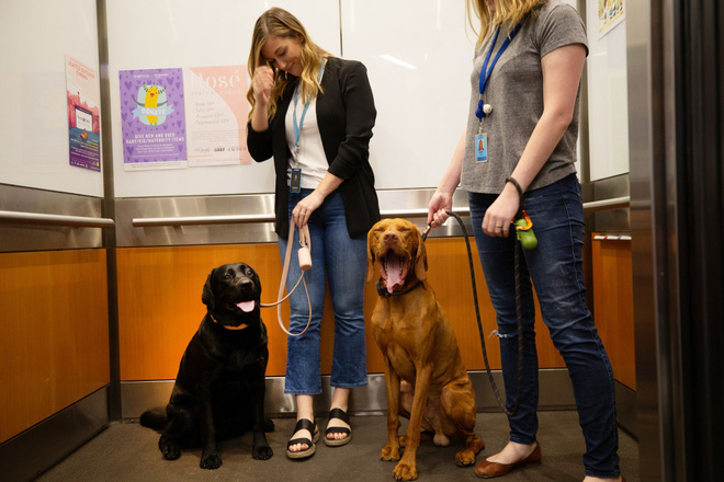 Có 7.000 con chó ở trụ sở Amazon tại Mỹ và đây là cách mà chúng sống sung sướng như ở thiên đường - Ảnh 1.
