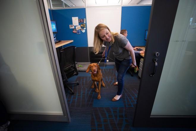 Có 7.000 con chó ở trụ sở Amazon tại Mỹ và đây là cách mà chúng sống sung sướng như ở thiên đường - Ảnh 4.