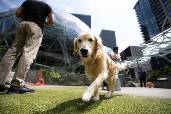 Có 7.000 con chó ở trụ sở Amazon tại Mỹ và đây là cách mà chúng sống sung sướng như ở thiên đường - Ảnh 5.