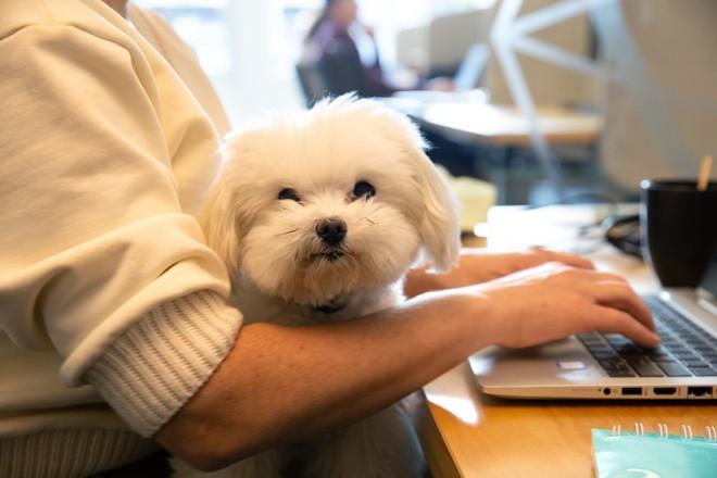 Có 7.000 con chó ở trụ sở Amazon tại Mỹ và đây là cách mà chúng sống sung sướng như ở thiên đường - Ảnh 6.