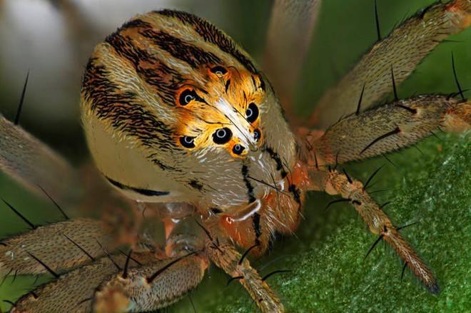 Halloween dưới ống kính hiển vi: 13 tấm ảnh chụp những sinh vật khiến bạn sởn gai ốc - Ảnh 2.