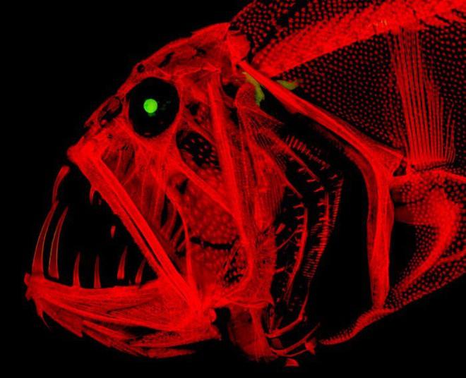 Halloween dưới ống kính hiển vi: 13 tấm ảnh chụp những sinh vật khiến bạn sởn gai ốc - Ảnh 9.