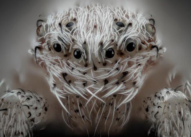 Halloween dưới ống kính hiển vi: 13 tấm ảnh chụp những sinh vật khiến bạn sởn gai ốc - Ảnh 1.