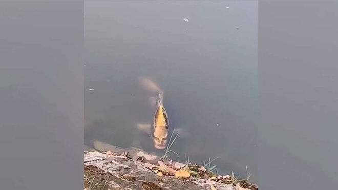 Con cá đáng sợ với đường nét như khuôn mặt người được phát hiện ở Trung Quốc - Ảnh 1.