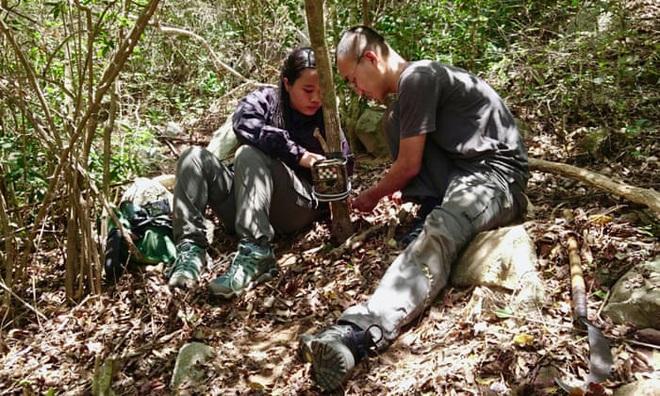 Cả thế giới vui mừng khi Việt Nam ghi nhận loài cheo cheo lưng bạc chưa tuyệt chủng sau 30 năm biến mất - Ảnh 2.