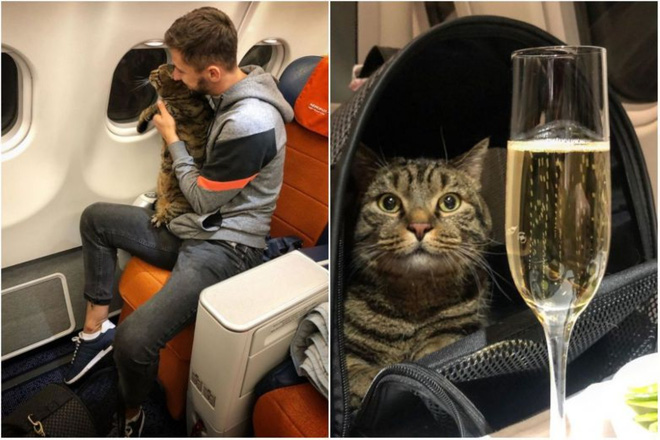 Thanh niên hí hửng post Facebook khoe thủ đoạn mang chú mèo quá cân lên máy bay và cái kết đắng - Ảnh 2.
