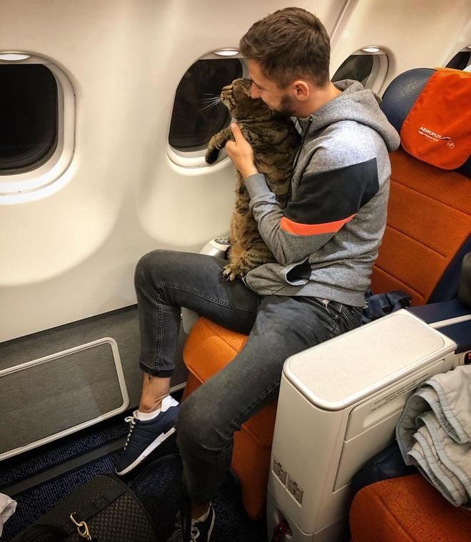 Thanh niên hí hửng post Facebook khoe thủ đoạn mang chú mèo quá cân lên máy bay và cái kết đắng - Ảnh 1.