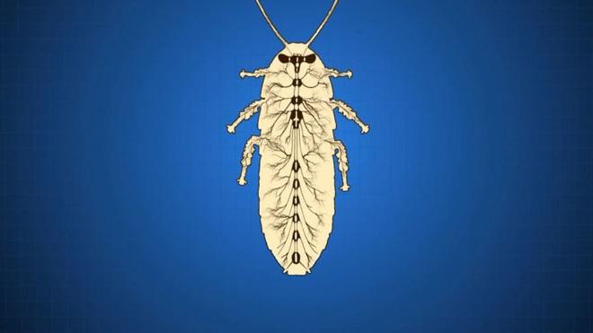 Tại sao côn trùng lại có kích thước nhỏ bé như vậy? Vì sao con gián mất đầu mà vẫn có thể sống và hô hấp bình thường? - Ảnh 9.