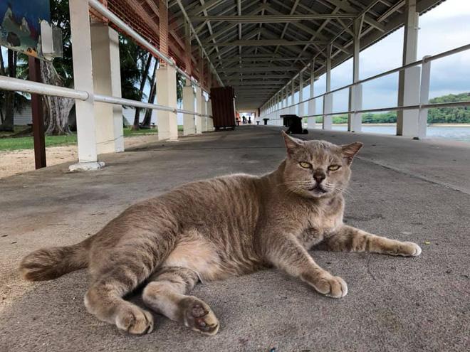 Cần gì đến Nhật Bản xa xôi, ngay tại Đông Nam Á cũng có 1 hòn đảo toàn mèo là mèo đây này - Ảnh 7.