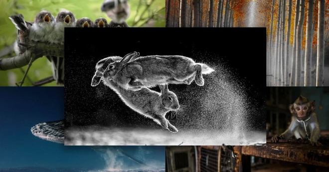 Thỏ nhảy là bức hình đoạt giải nhất Cuộc thi nhiếp ảnh Thiên nhiên hoang dã 2019 - Ảnh 1.