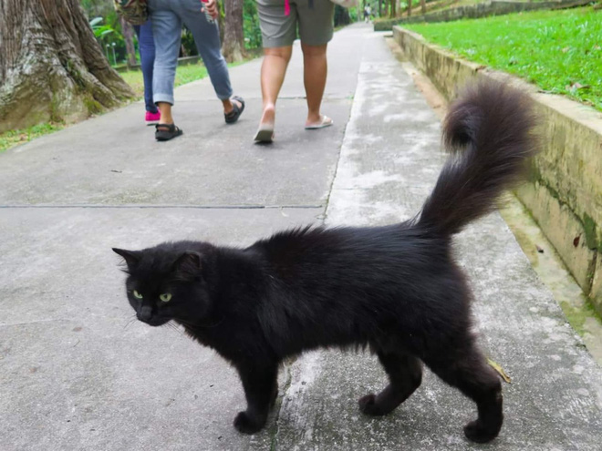 Cần gì đến Nhật Bản xa xôi, ngay tại Đông Nam Á cũng có 1 hòn đảo toàn mèo là mèo đây này - Ảnh 3.