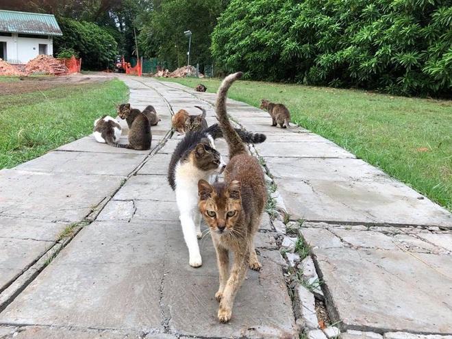 Cần gì đến Nhật Bản xa xôi, ngay tại Đông Nam Á cũng có 1 hòn đảo toàn mèo là mèo đây này - Ảnh 1.