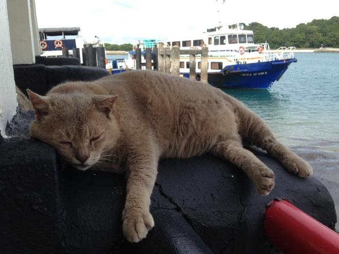 Cần gì đến Nhật Bản xa xôi, ngay tại Đông Nam Á cũng có 1 hòn đảo toàn mèo là mèo đây này - Ảnh 6.