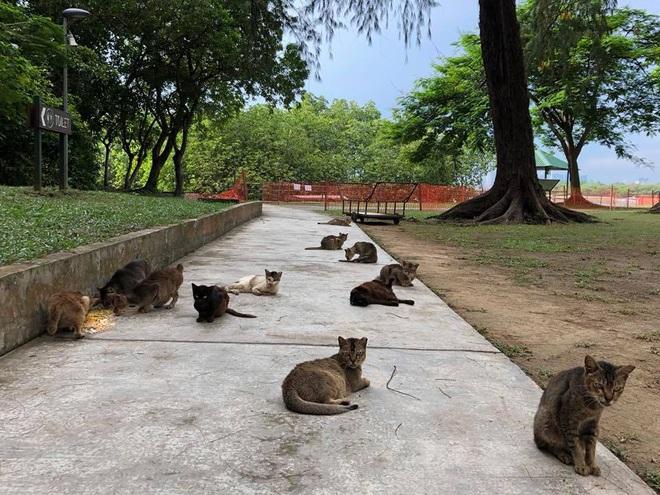Cần gì đến Nhật Bản xa xôi, ngay tại Đông Nam Á cũng có 1 hòn đảo toàn mèo là mèo đây này - Ảnh 5.