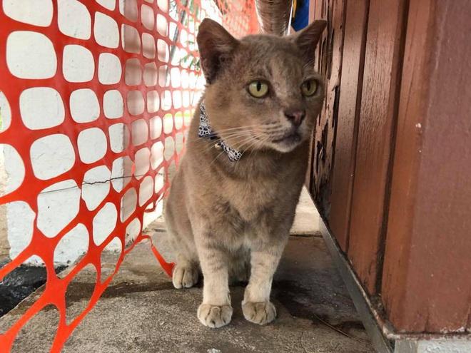 Cần gì đến Nhật Bản xa xôi, ngay tại Đông Nam Á cũng có 1 hòn đảo toàn mèo là mèo đây này - Ảnh 4.