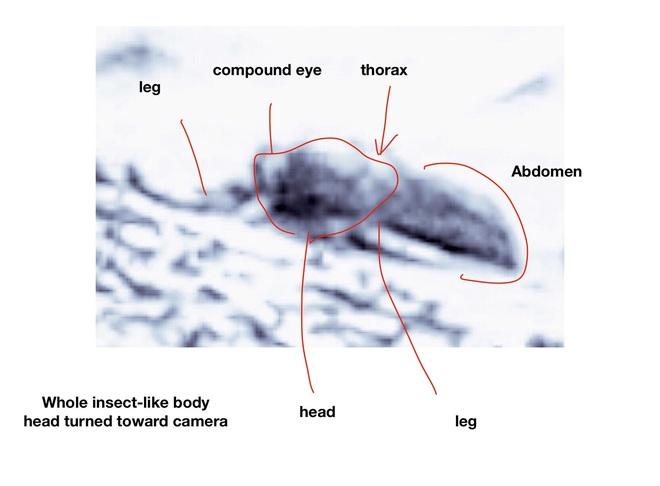 Cựu khoa học gia của NASA tuyên bố tìm thấy côn trùng sống trên Sao Hỏa - Ảnh 3.