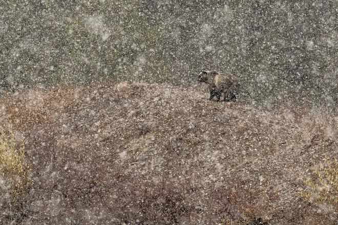 Thỏ nhảy là bức hình đoạt giải nhất Cuộc thi nhiếp ảnh Thiên nhiên hoang dã 2019 - Ảnh 5.