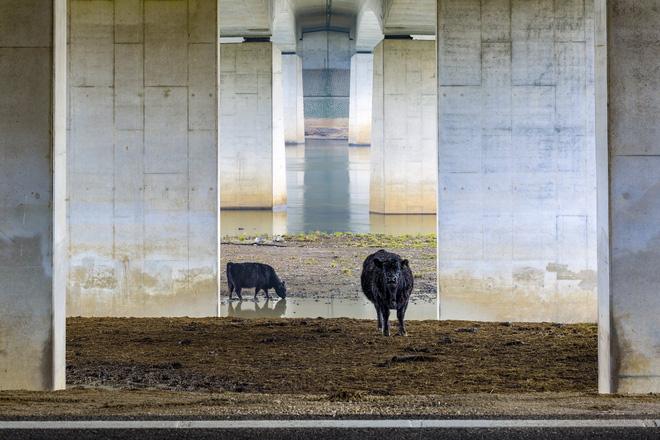 Thỏ nhảy là bức hình đoạt giải nhất Cuộc thi nhiếp ảnh Thiên nhiên hoang dã 2019 - Ảnh 12.