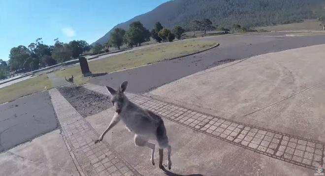 Đi nhảy dù, anh thanh niên số nhọ bị con kangaroo lao đến đấm túi bụi khi vừa mới tiếp đất - Ảnh 2.