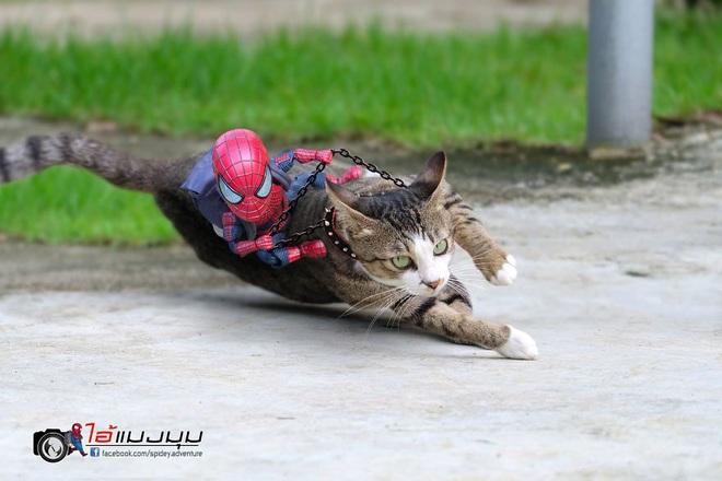Cưng muốn xỉu với bộ ảnh chuyến phiêu lưu của boss mèo và sen Spider-Man - Ảnh 1.