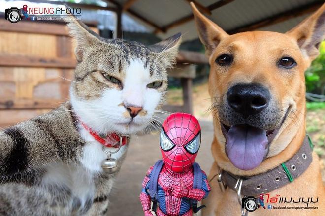 Cưng muốn xỉu với bộ ảnh chuyến phiêu lưu của boss mèo và sen Spider-Man - Ảnh 14.
