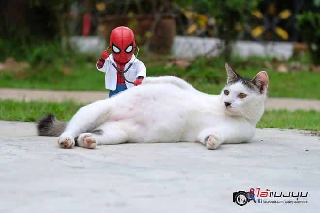 Cưng muốn xỉu với bộ ảnh chuyến phiêu lưu của boss mèo và sen Spider-Man - Ảnh 15.