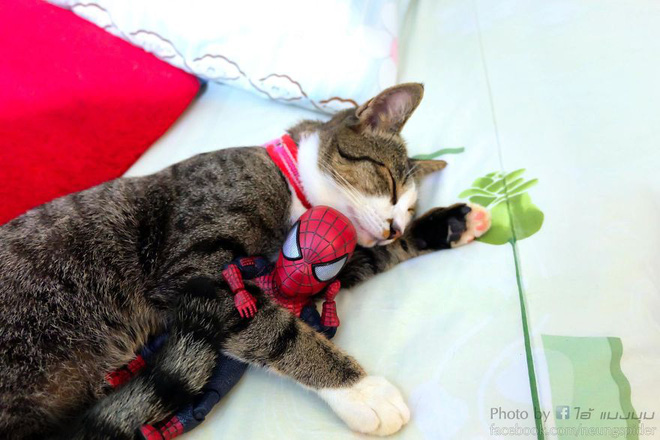 Cưng muốn xỉu với bộ ảnh chuyến phiêu lưu của boss mèo và sen Spider-Man - Ảnh 16.