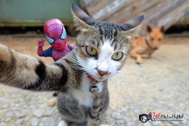 Cưng muốn xỉu với bộ ảnh chuyến phiêu lưu của boss mèo và sen Spider-Man - Ảnh 17.