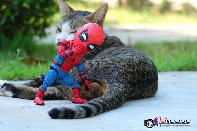 Cưng muốn xỉu với bộ ảnh chuyến phiêu lưu của boss mèo và sen Spider-Man - Ảnh 22.