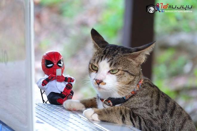 Cưng muốn xỉu với bộ ảnh chuyến phiêu lưu của boss mèo và sen Spider-Man - Ảnh 26.