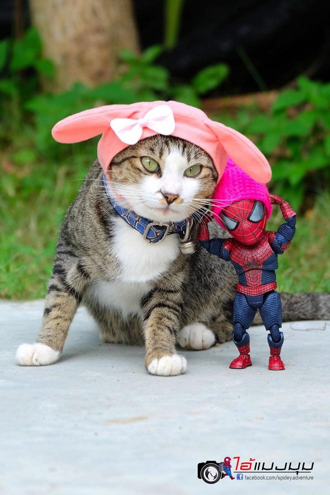 Cưng muốn xỉu với bộ ảnh chuyến phiêu lưu của boss mèo và sen Spider-Man - Ảnh 28.