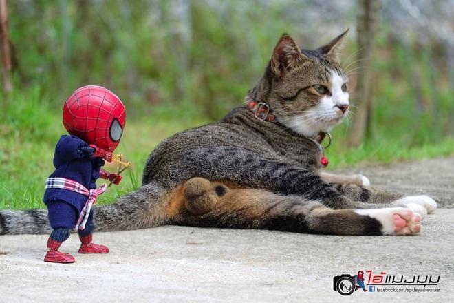 Cưng muốn xỉu với bộ ảnh chuyến phiêu lưu của boss mèo và sen Spider-Man - Ảnh 3.