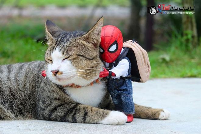 Cưng muốn xỉu với bộ ảnh chuyến phiêu lưu của boss mèo và sen Spider-Man - Ảnh 4.