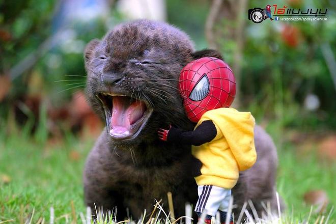 Cưng muốn xỉu với bộ ảnh chuyến phiêu lưu của boss mèo và sen Spider-Man - Ảnh 5.