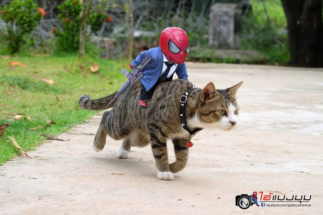 Cưng muốn xỉu với bộ ảnh chuyến phiêu lưu của boss mèo và sen Spider-Man - Ảnh 6.