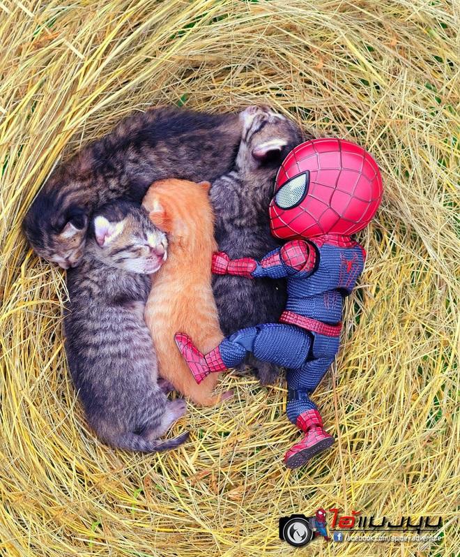 Cưng muốn xỉu với bộ ảnh chuyến phiêu lưu của boss mèo và sen Spider-Man - Ảnh 8.