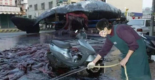 Cá voi nổ! Vũ khí sinh hóa to lớn nhất trên Trái Đất - Ảnh 5.