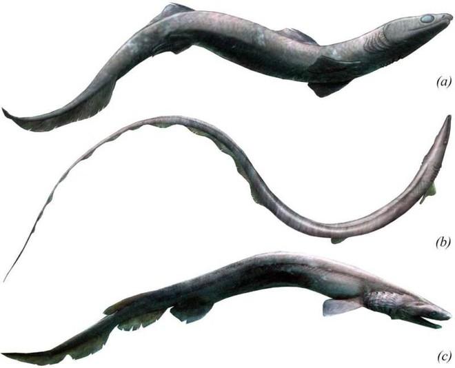 Cá mập hiện đại có thân hình to lớn, nhưng tổ tiên 360 triệu năm trước của chúng lại trông rất giống loài lươn - Ảnh 3.