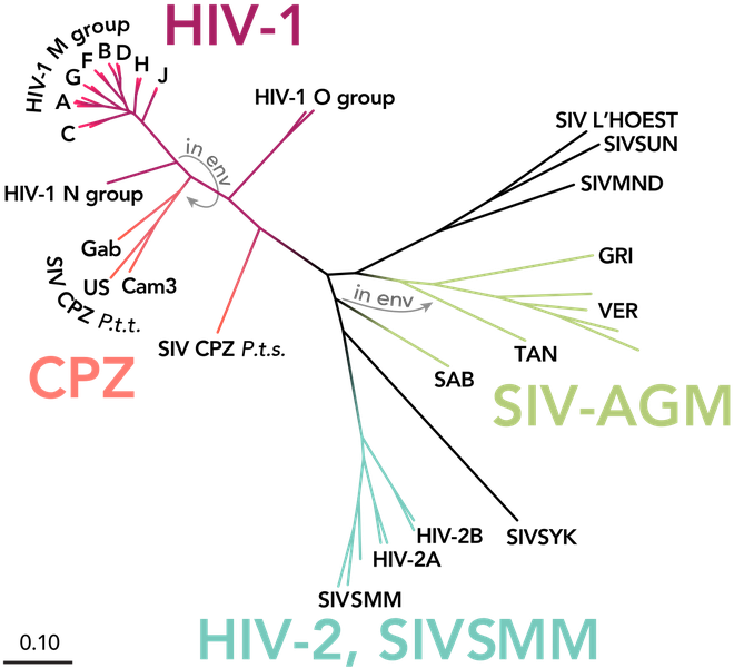Lần đầu tiên sau 19 năm, các nhà khoa học phát hiện ra một chủng HIV mới - Ảnh 2.