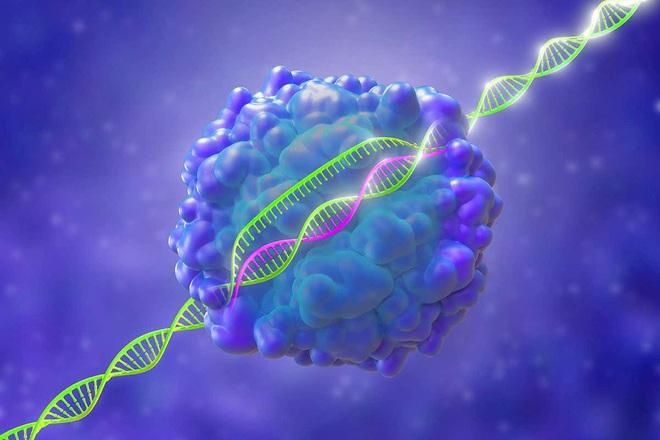 Lần đầu tiên, ba bệnh nhân ung thư ở Mỹ được điều trị bằng kỹ thuật chỉnh sửa gen CRISPR - Ảnh 3.