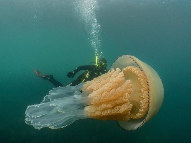 Hàng ngàn loài sinh vật tuyệt chủng vì biến đổi khí hậu, tại sao chỉ riêng sứa sinh sôi mạnh? - Ảnh 1.