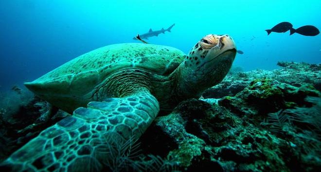 Hàng ngàn loài sinh vật tuyệt chủng vì biến đổi khí hậu, tại sao chỉ riêng sứa sinh sôi mạnh? - Ảnh 9.