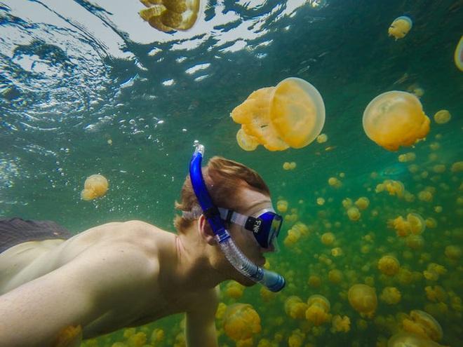 Hàng ngàn loài sinh vật tuyệt chủng vì biến đổi khí hậu, tại sao chỉ riêng sứa sinh sôi mạnh? - Ảnh 11.