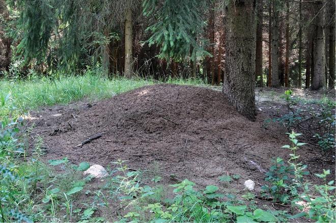 Bốn triệu con kiến bị mắc kẹt dưới hầm hạt nhân thời Liên Xô, chúng đã làm thế nào để sống? - Ảnh 2.