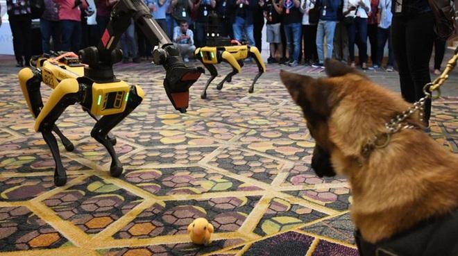 Chó robot của Boston Dynamics lần đầu tham gia vào biệt đội phá bom của cảnh sát Mỹ - Ảnh 1.
